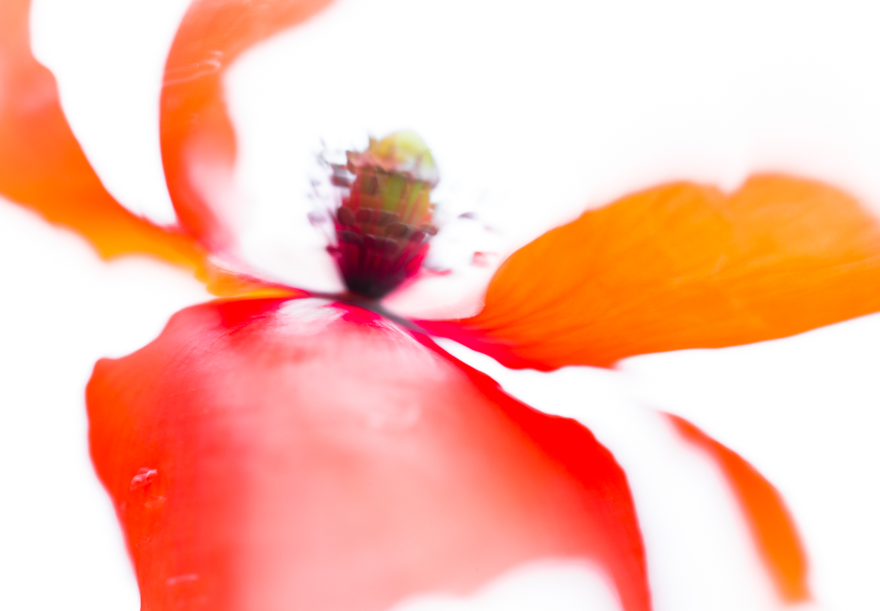 The Ultimate Guide to Shutter Speed for Macro Photography