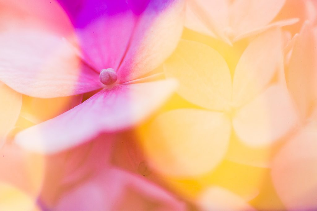 fairy light macro photography cluster of pink flowers