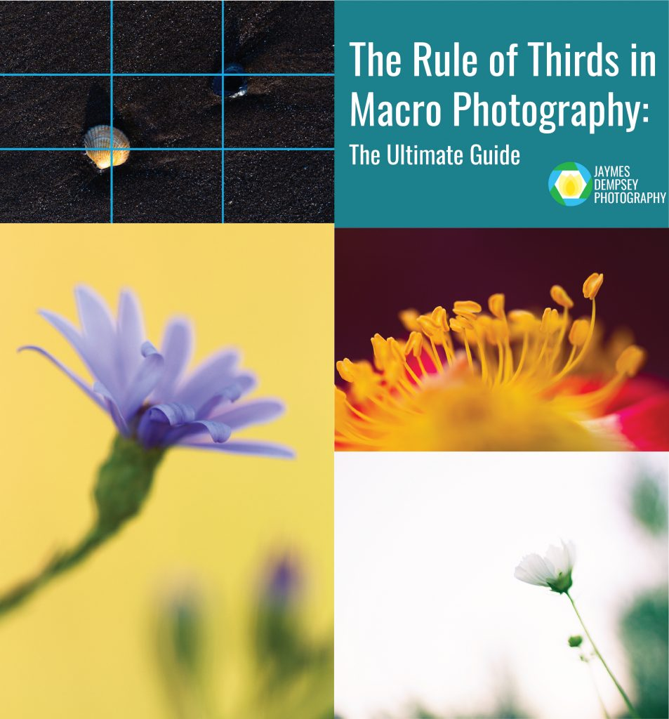 rule of thirds in macro photography
