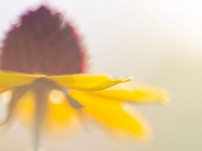 macro-photography-jaymes-dempsey-11
