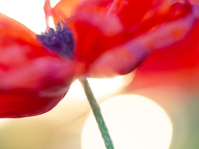 macro-photography-jaymes-dempsey-30